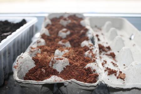 Seeds planting in used egg cartons starting in door germinating Imagens