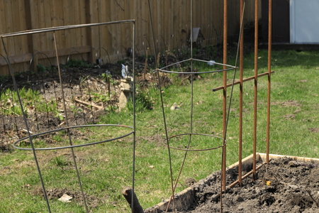 Raised gardening beds gardening concept with tomato cages and trellis in it