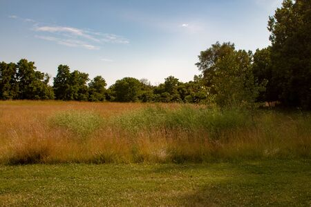 Long grass landscape type photo. Room for copy space. Photo shows beauty of Ontario nature 版權商用圖片