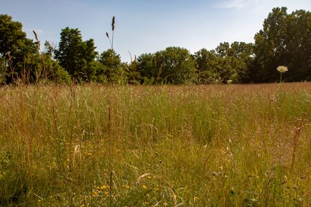 A long grass meadow landscape with various species of wildflower in Ontario