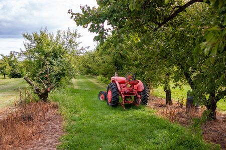 Antique Tractor and orchard. An antique farm tractor sits amidst an orchard of blossoming apple trees