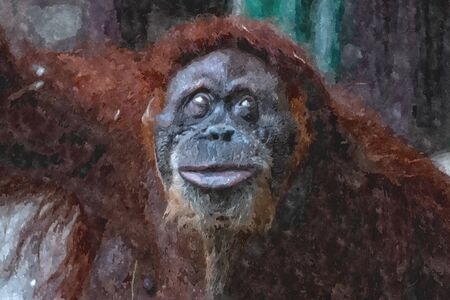 digital water color painting of an orangutan. Critically endangered species. 스톡 콘텐츠