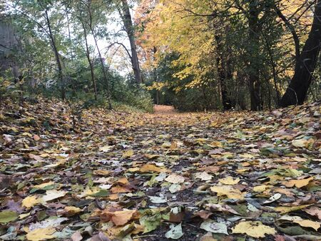 Autumn Nature and Path With Autumn Leaves..