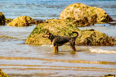 photograph of a dog in the water on a beach