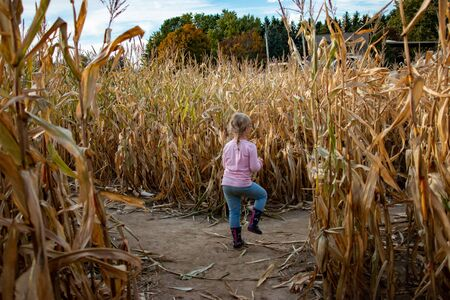 Little girl exploring a corn maze in autumn. Fun seasonal family activity.