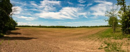 Idyllic rural view of pretty farmland and healthy livestock, in the beautiful surroundings of southern Ontario.