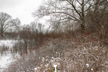 minimalist winter landscape panorama style photo. Unique perspective 写真素材