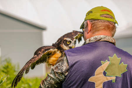 Simcoe, Canada, July 31 2021: Editorial photo of a bird handler training a spectacled owl