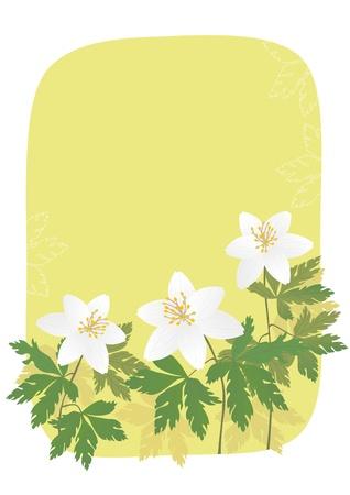 anemone: Anemone