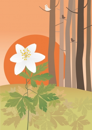 anemone: Anemone at the sundown