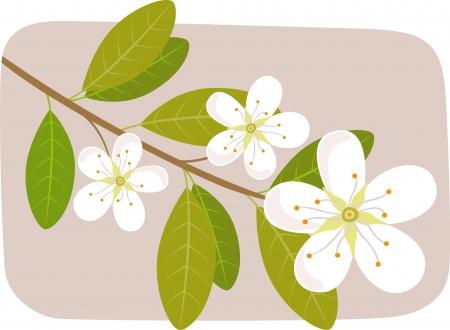 apple blossom: Blossom