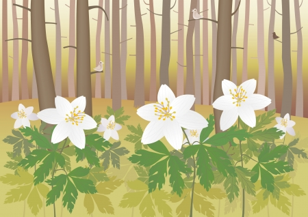 anemone: Anemone in a forest