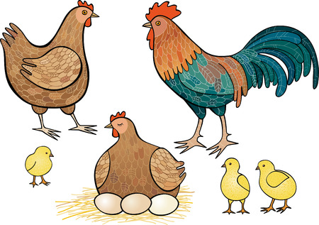 brood: Fowls Illustration