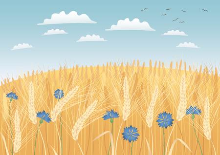 grain fields: Grain fields