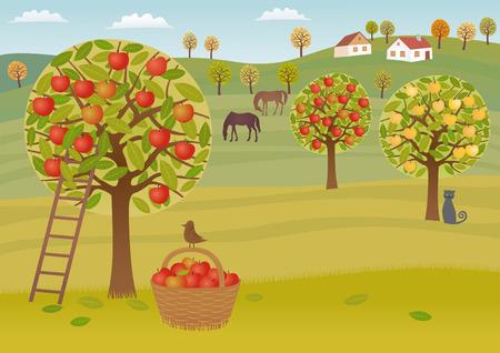 apple orchard: Apple harvest