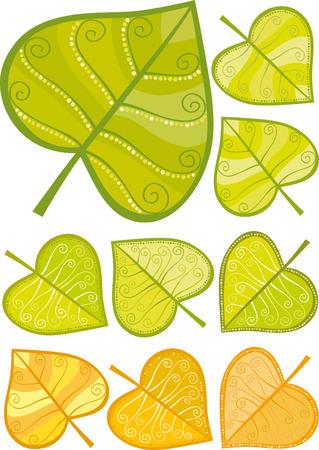 linden tree: Leaf