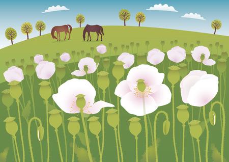 opium: Poppy fields Illustration