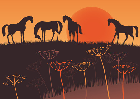 Sunset and horses