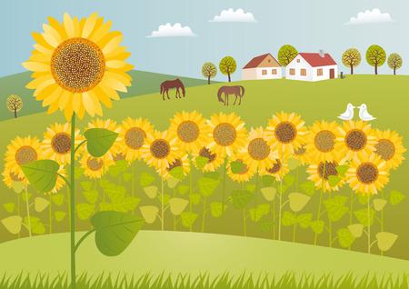 Sonnenblumenfelder Standard-Bild - 25664567