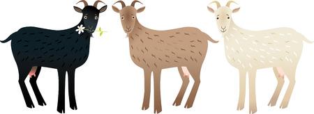 teat: Goat