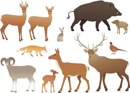 mouflon: Forest animals Illustration