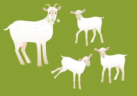 teat: Goats Illustration