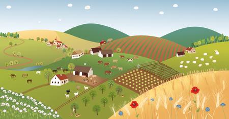 corn poppy: Summer farmer landscape