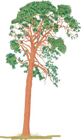 pinetree: Pine-tree Illustration