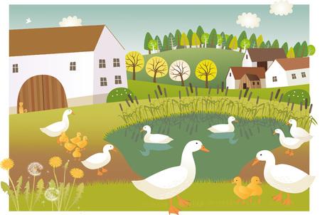 watter: Duck farm
