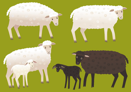 fleecy: Set of sheep Illustration