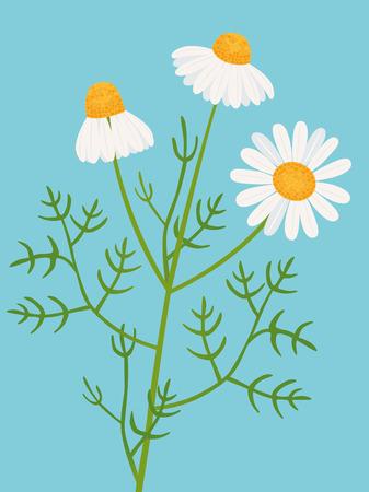 chamomile Ilustração
