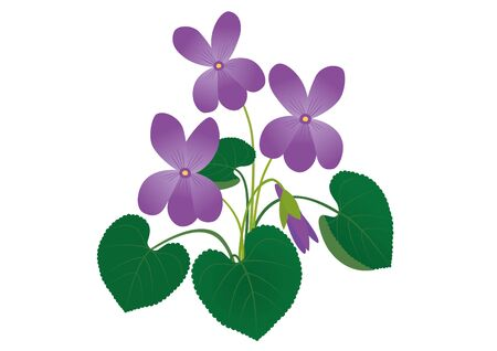 Vector illustration of a spring flower violet.