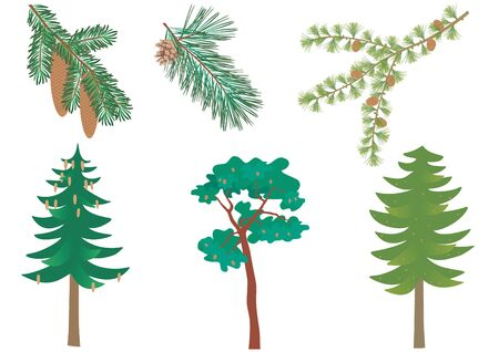 Vector set of three common European forest trees with detail of needles and cones. Picea abies, pinus sylvestris, larix decidua. Vectores