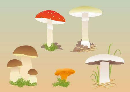 Vector image of various common forest mushrooms Vectores