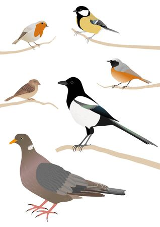 Vector illustration. Set of common european birds. Erithacus rubecula, Parus major, Pica pica, Passer domesticus, Phoenicurus phoenicurus, Columba palumbus Vectores