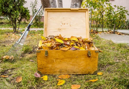 yard: Old Chest and Fall Atmosphere