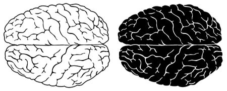 Two brains, normal and black white version Stock Photo - 2806514