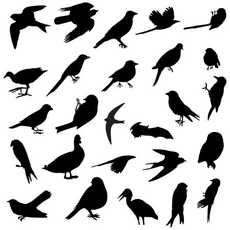 26 silhouettes of several birds races photo