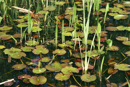 The pond is full of life while as the spring awakes al the creatures Stock Photo - 3039891