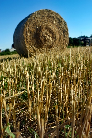 Yellow bale in a hay field photo