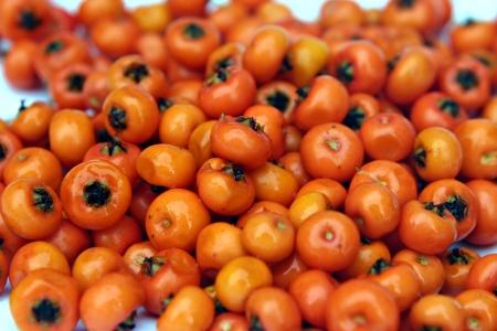 wintry: Many wet orange berries