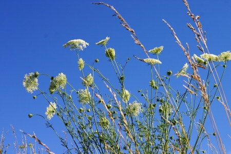 Green plants, blossom and flower against a deep blue sky Stock Photo - 16921747
