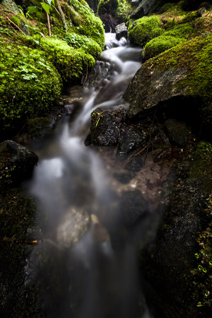Water in motion while flowing in the forest river between moss