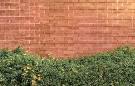 lantana camara: background and texture of vintage style decorative brown brick wall with Lantana camara or Cloth of gold Stock Photo