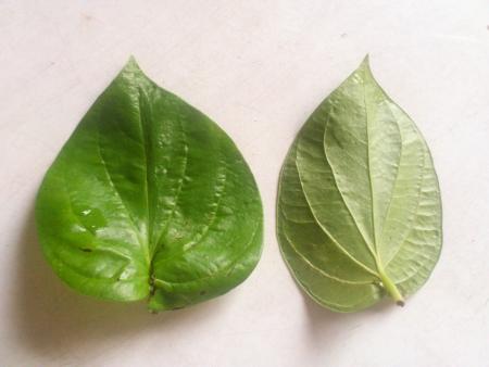 betelnut: The betel leaf  Stock Photo