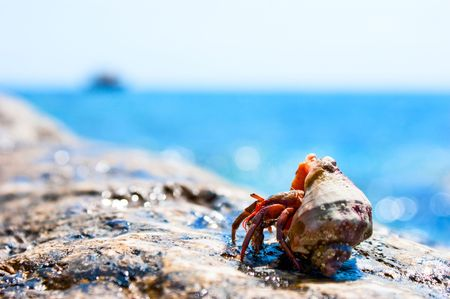 Hermit crab coming out from it's hell with ocean in the background