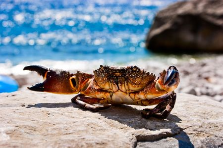 Crab on the stone with ocean in the background photo
