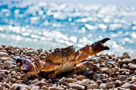 Old crab on the beach with ocean in the background photo