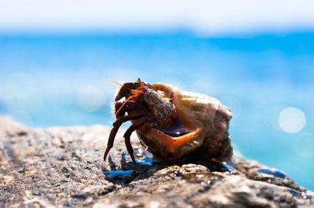 Hermit crab going out from seashell with ocean in the background Archivio Fotografico