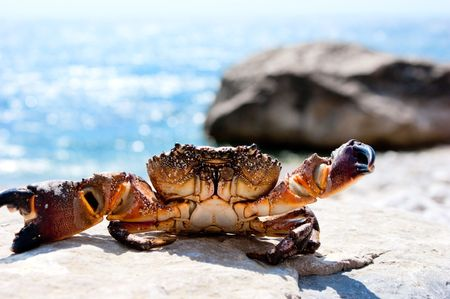 Crab basking in the sunshine with ocean in the background Archivio Fotografico